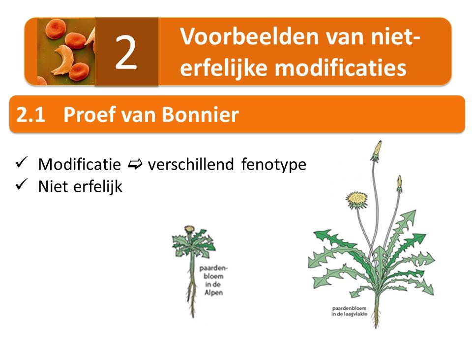 2.2Niet-erfelijke modificaties in de natuur Voorbeeld: pijlkruid ( Sagittaria sagittifolia ) ondiep, stilstaand water diep, stromend water Voorbeeld: ontwikkeling van werkster en koningin bij honingbijen