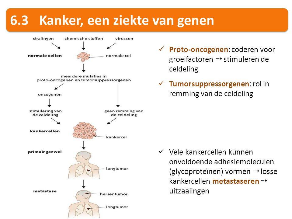 6.3Kanker, een ziekte van genen Proto-oncogenen: coderen voor groeifactoren  stimuleren de celdeling Tumorsuppressorgenen: rol in remming van de celd