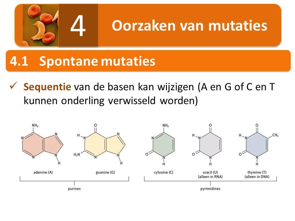 Oorzaken van mutaties 4 4 4.1Spontane mutaties Sequentie van de basen kan wijzigen (A en G of C en T kunnen onderling verwisseld worden)