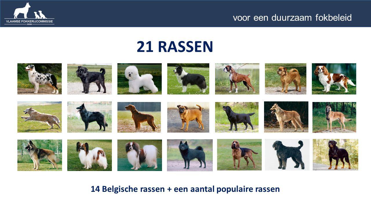 14 Belgische rassen + een aantal populaire rassen 21 RASSEN voor een duurzaam fokbeleid …