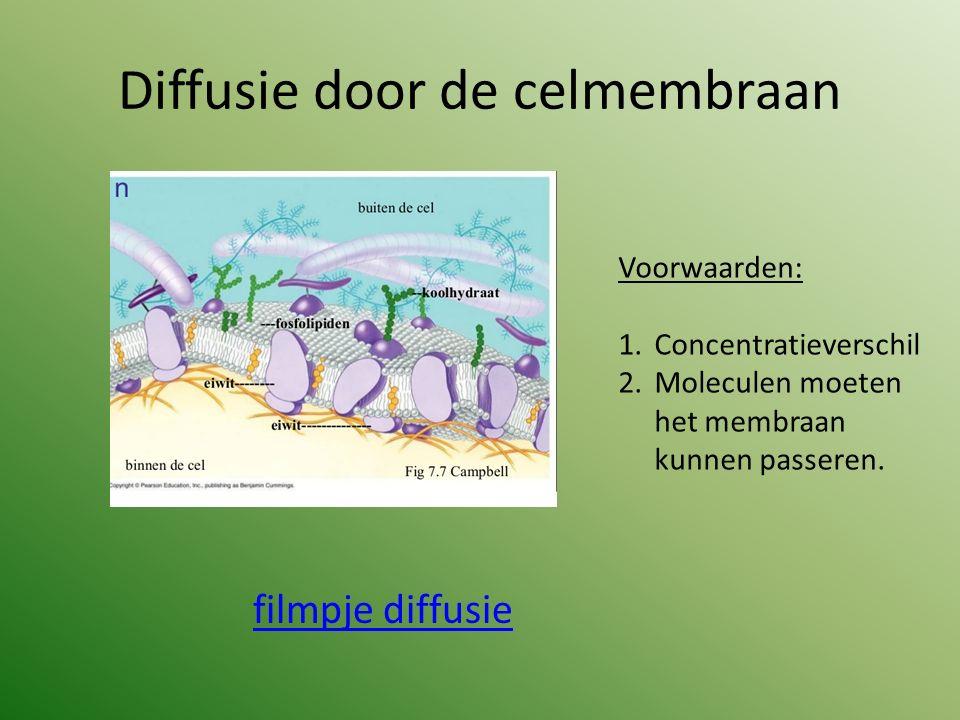 Diffusie door de celmembraan filmpje diffusie Voorwaarden: 1.Concentratieverschil 2.Moleculen moeten het membraan kunnen passeren.