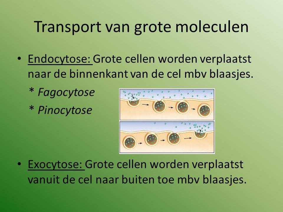 Transport van grote moleculen Endocytose: Grote cellen worden verplaatst naar de binnenkant van de cel mbv blaasjes. * Fagocytose * Pinocytose Exocyto