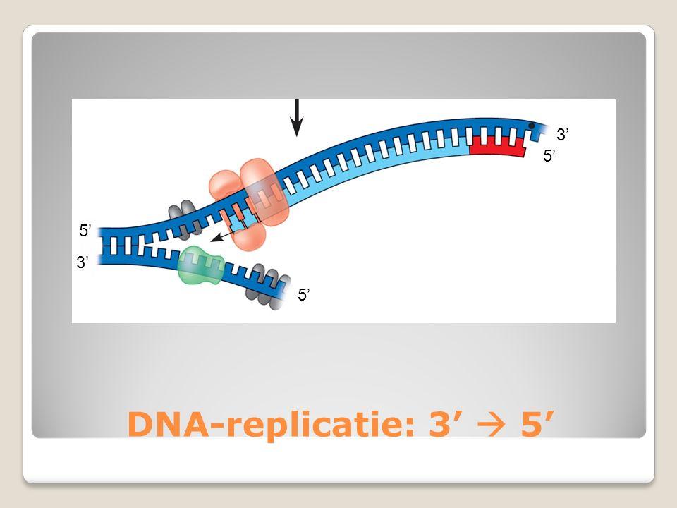 DNA-replicatie: 3'  5' 3' 5'