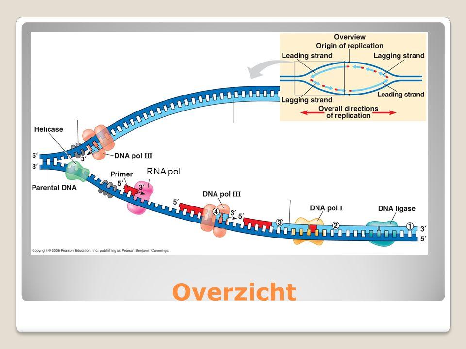 Overzicht RNA pol