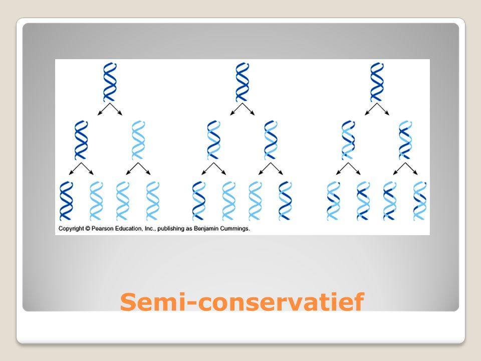 Semi-conservatief