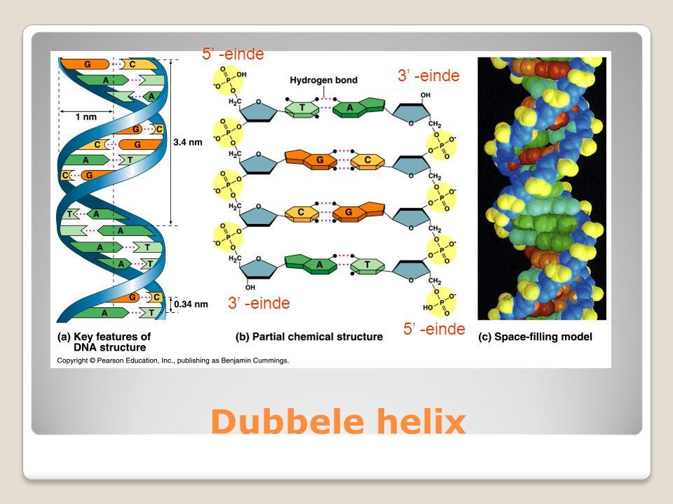 Dubbele helix 3' -einde 5' -einde
