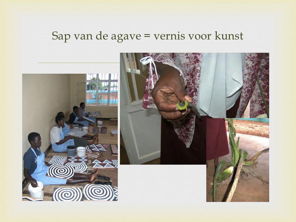  Sap van de agave = vernis voor kunst
