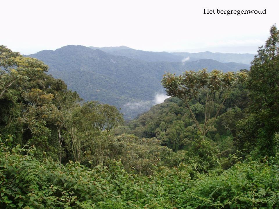  Het bergregenwoud