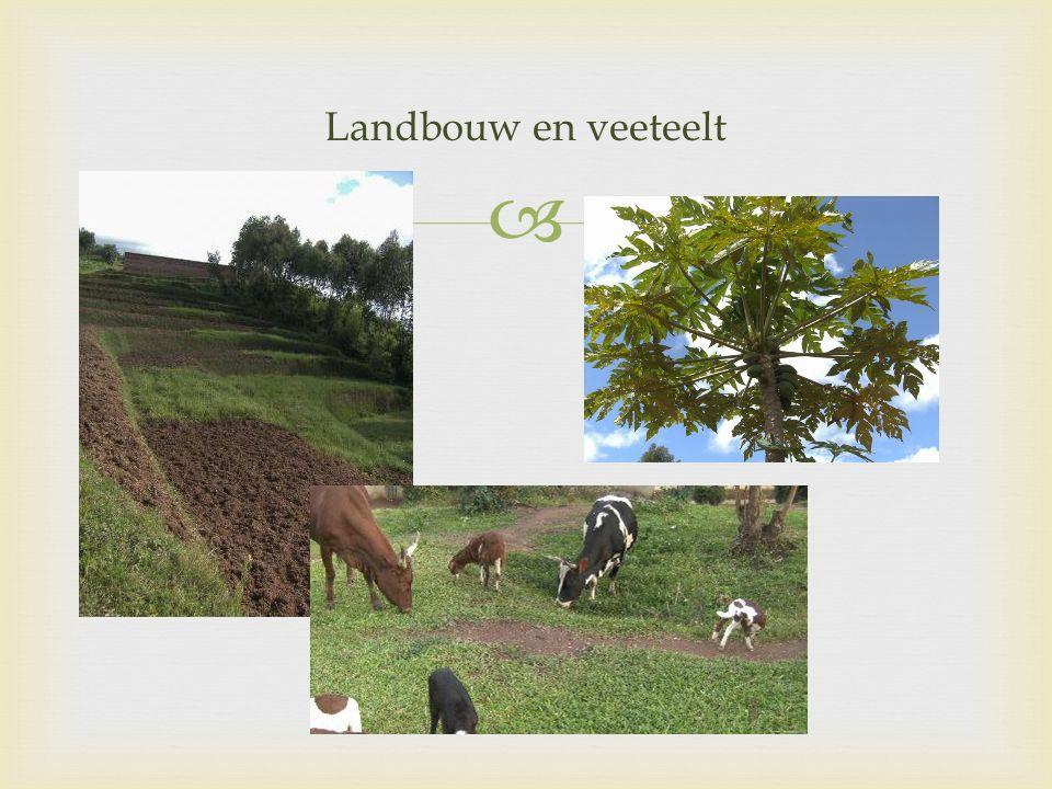 Landbouw en veeteelt