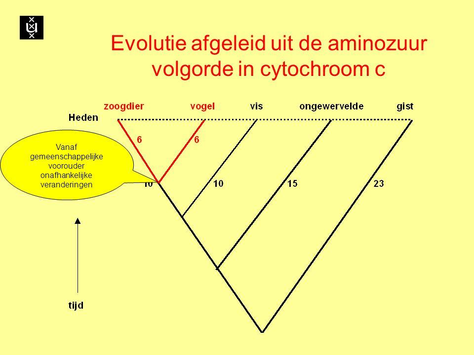 Evolutie afgeleid uit de aminozuur volgorde in cytochroom c Vanaf gemeenschappelijke voorouder onafhankelijke veranderingen