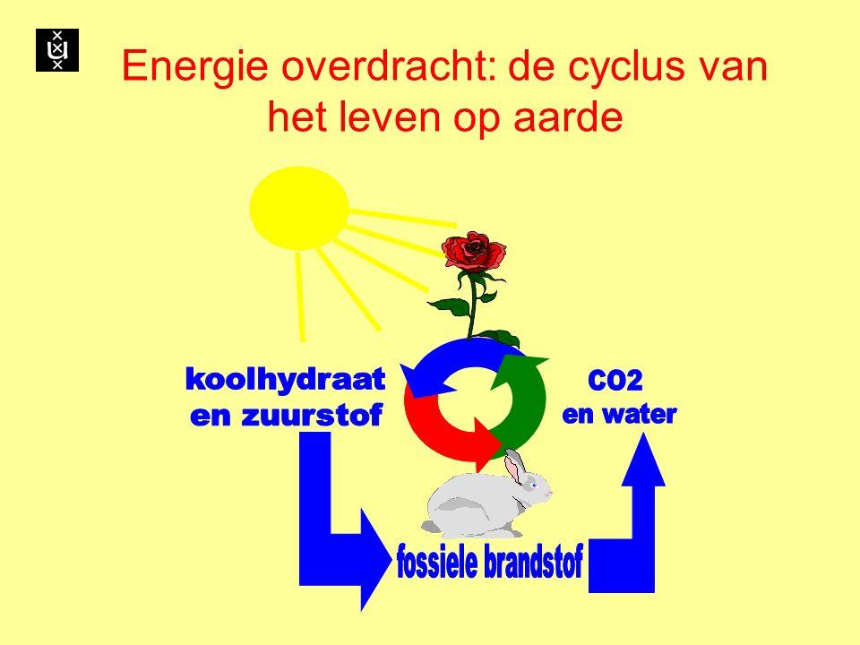 Energie overdracht: de cyclus van het leven op aarde