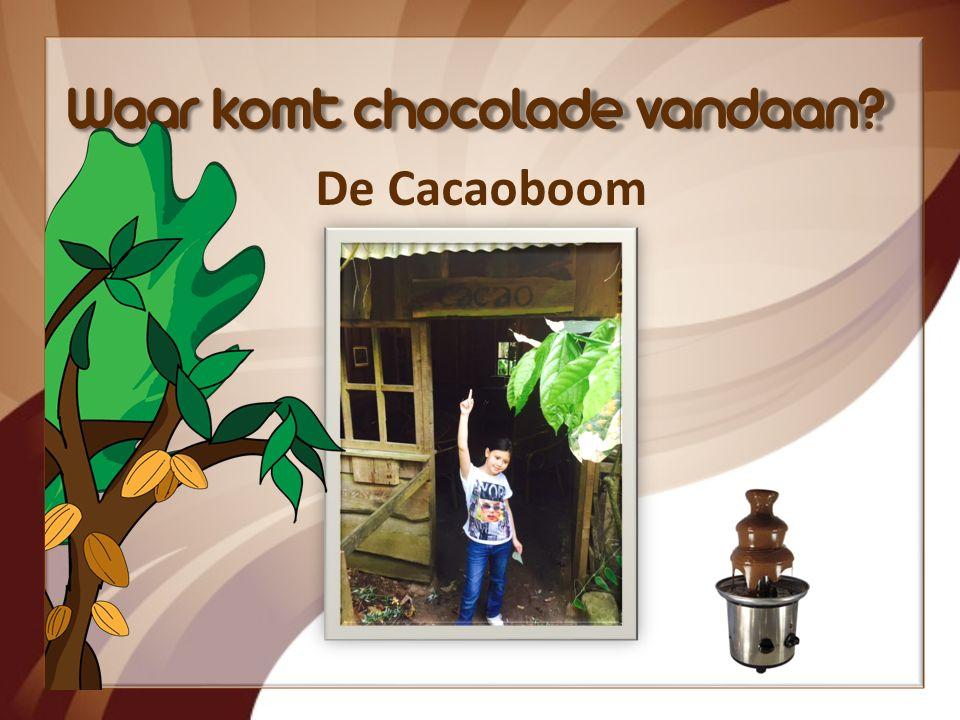 Chocolade in Europa 1820 Nederland