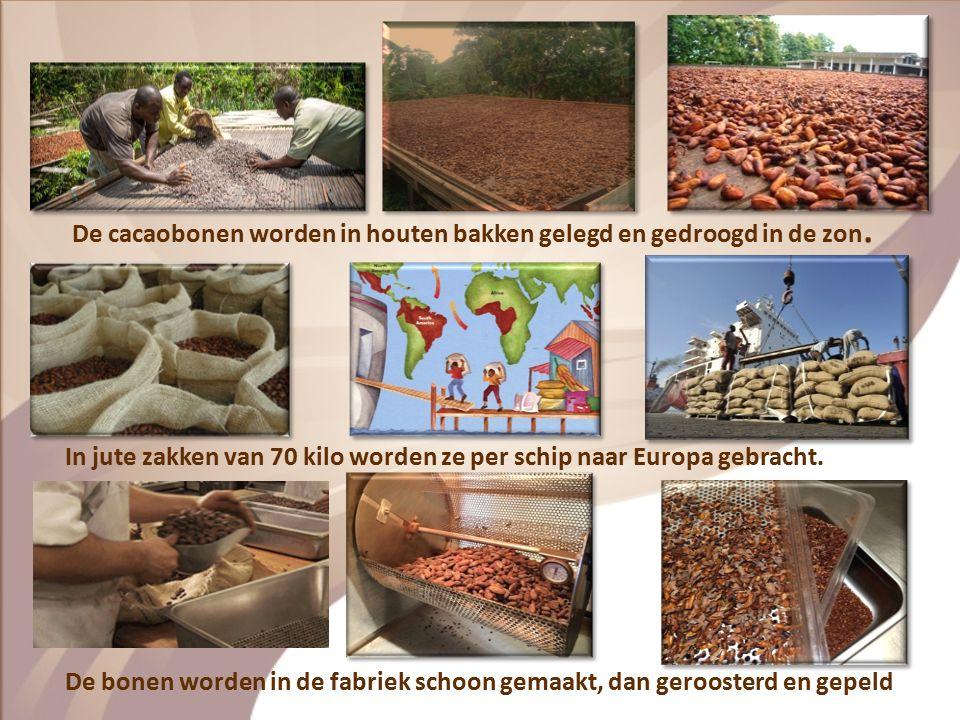 Hoe wordt chocolade gemaakt? Hoofdstuk 2
