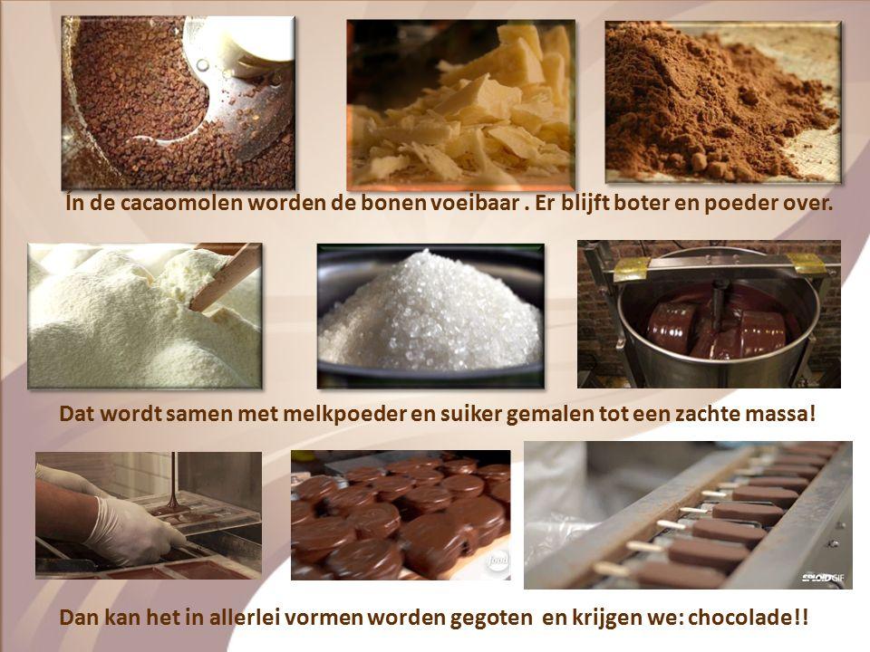 De cacaobonen worden in houten bakken gelegd en gedroogd in de zon. In jute zakken van 70 kilo worden ze per schip naar Europa gebracht. De bonen word