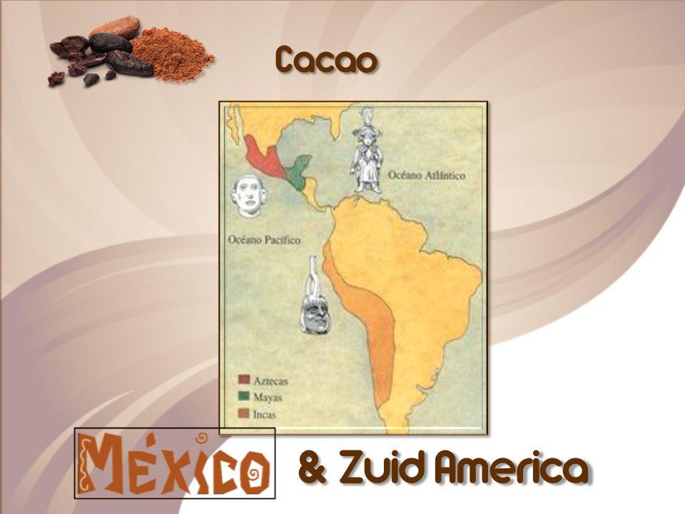 Ín de cacaomolen worden de bonen voeibaar.Er blijft boter en poeder over.