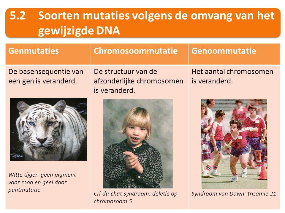 5.2Soorten mutaties volgens de omvang van het gewijzigde DNA GenmutatiesChromosoommutatieGenoommutatie De basensequentie van een gen is veranderd. Wit