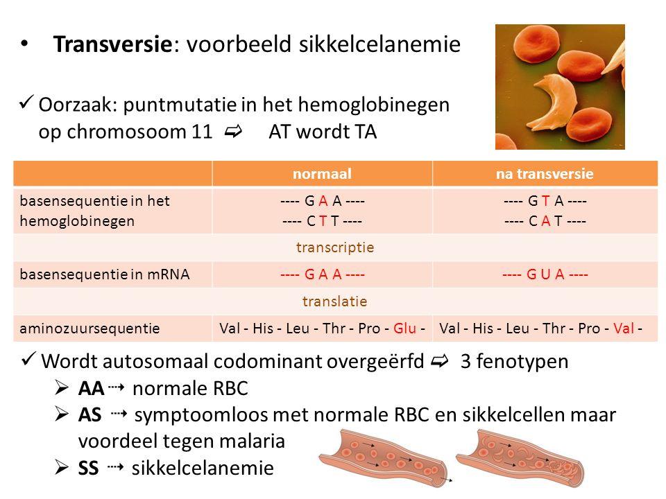Transversie: voorbeeld sikkelcelanemie Oorzaak: puntmutatie in het hemoglobinegen op chromosoom 11  AT wordt TA normaalna transversie basensequentie