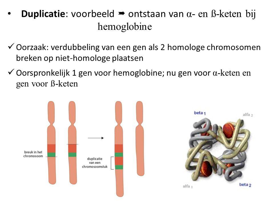 Duplicatie: voorbeeld  ontstaan van α- en ß-keten bij hemoglobine Oorzaak: verdubbeling van een gen als 2 homologe chromosomen breken op niet-homolog