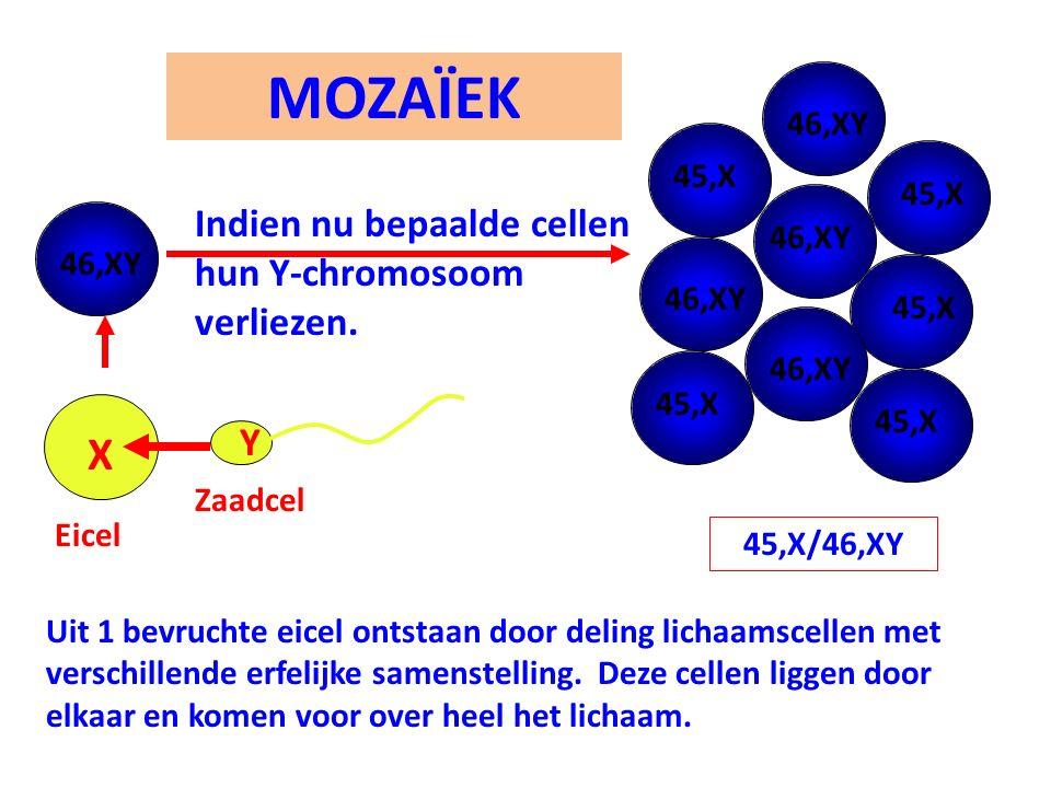 Uit 1 bevruchte eicel ontstaan door deling lichaamscellen met verschillende erfelijke samenstelling. Deze cellen liggen door elkaar en komen voor over