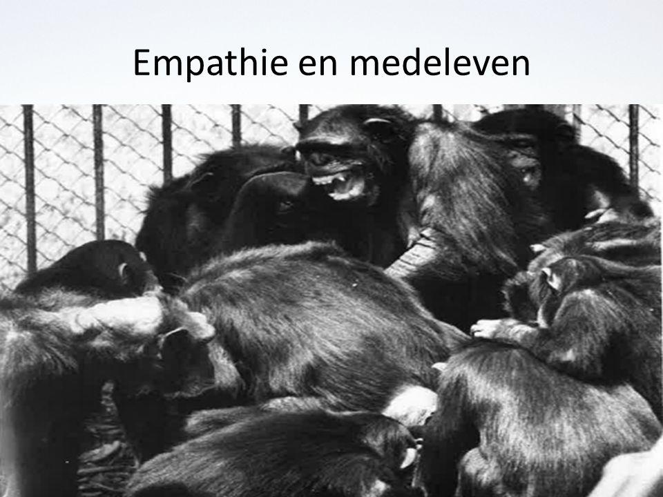 Empathie en medeleven