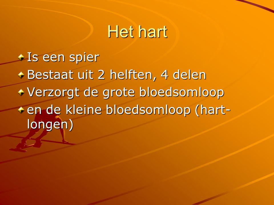 Het hart Is een spier Bestaat uit 2 helften, 4 delen Verzorgt de grote bloedsomloop en de kleine bloedsomloop (hart- longen)