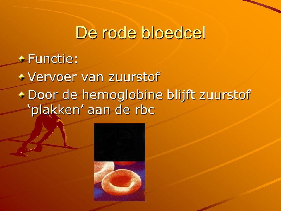 De rode bloedcel Functie: Vervoer van zuurstof Door de hemoglobine blijft zuurstof 'plakken' aan de rbc