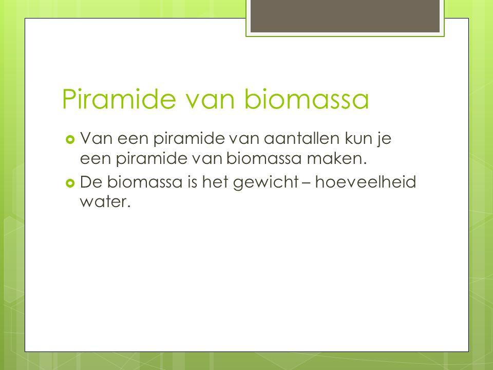 Piramide van biomassa  Van een piramide van aantallen kun je een piramide van biomassa maken.  De biomassa is het gewicht – hoeveelheid water.