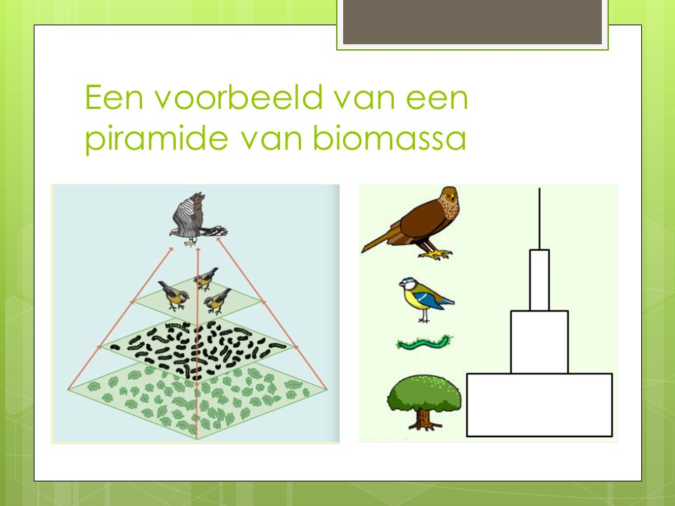 Een voorbeeld van een piramide van biomassa