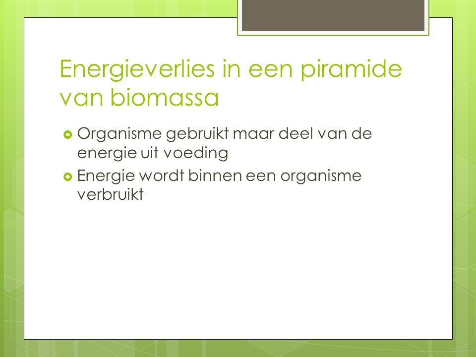 Energieverlies in een piramide van biomassa  Organisme gebruikt maar deel van de energie uit voeding  Energie wordt binnen een organisme verbruikt