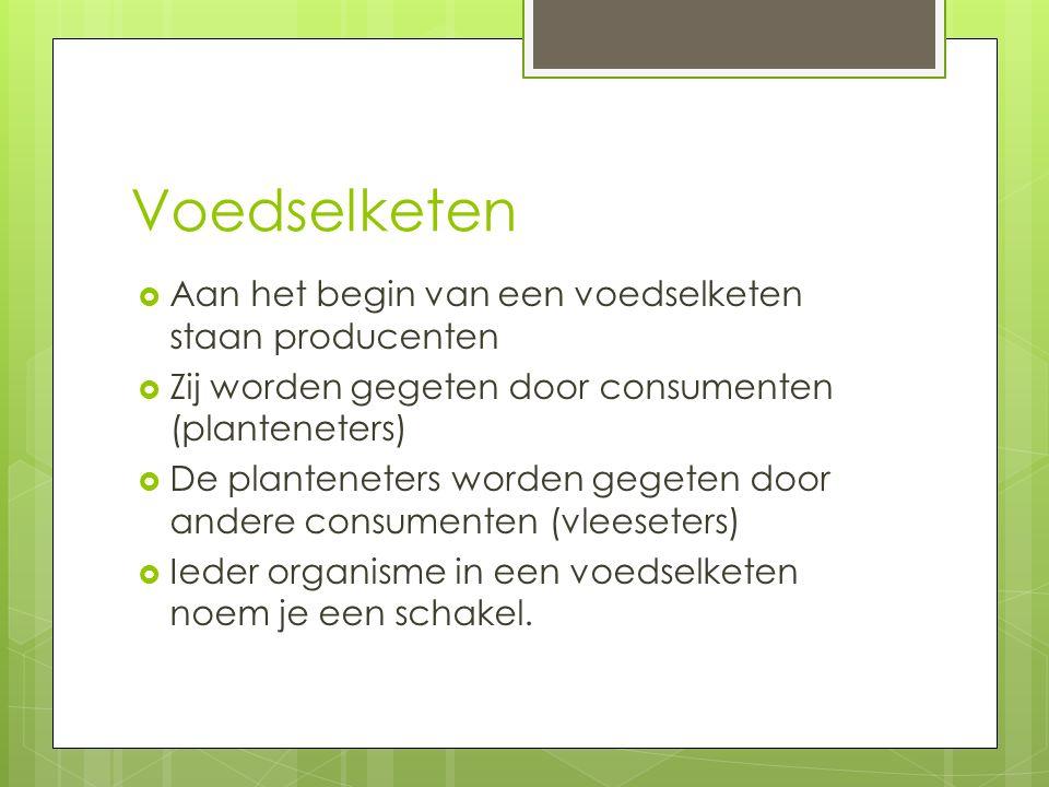 Voedselketen  Aan het begin van een voedselketen staan producenten  Zij worden gegeten door consumenten (planteneters)  De planteneters worden gege