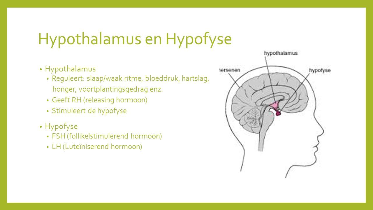 Hypothalamus en Hypofyse Hypothalamus Reguleert: slaap/waak ritme, bloeddruk, hartslag, honger, voortplantingsgedrag enz.