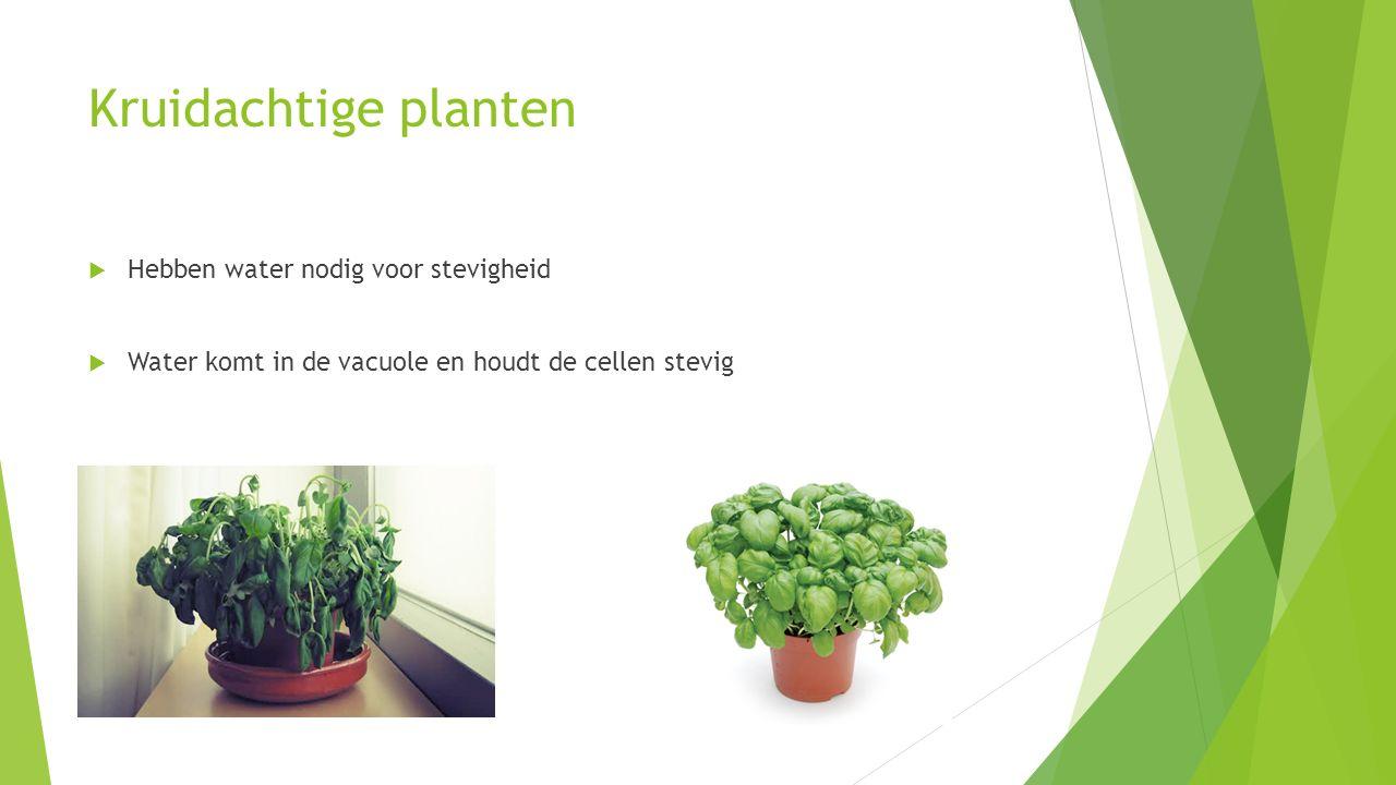 Houtachtige planten  Stam en takken bestaan uit houtcellen met houtstof (harder dan cellulose)