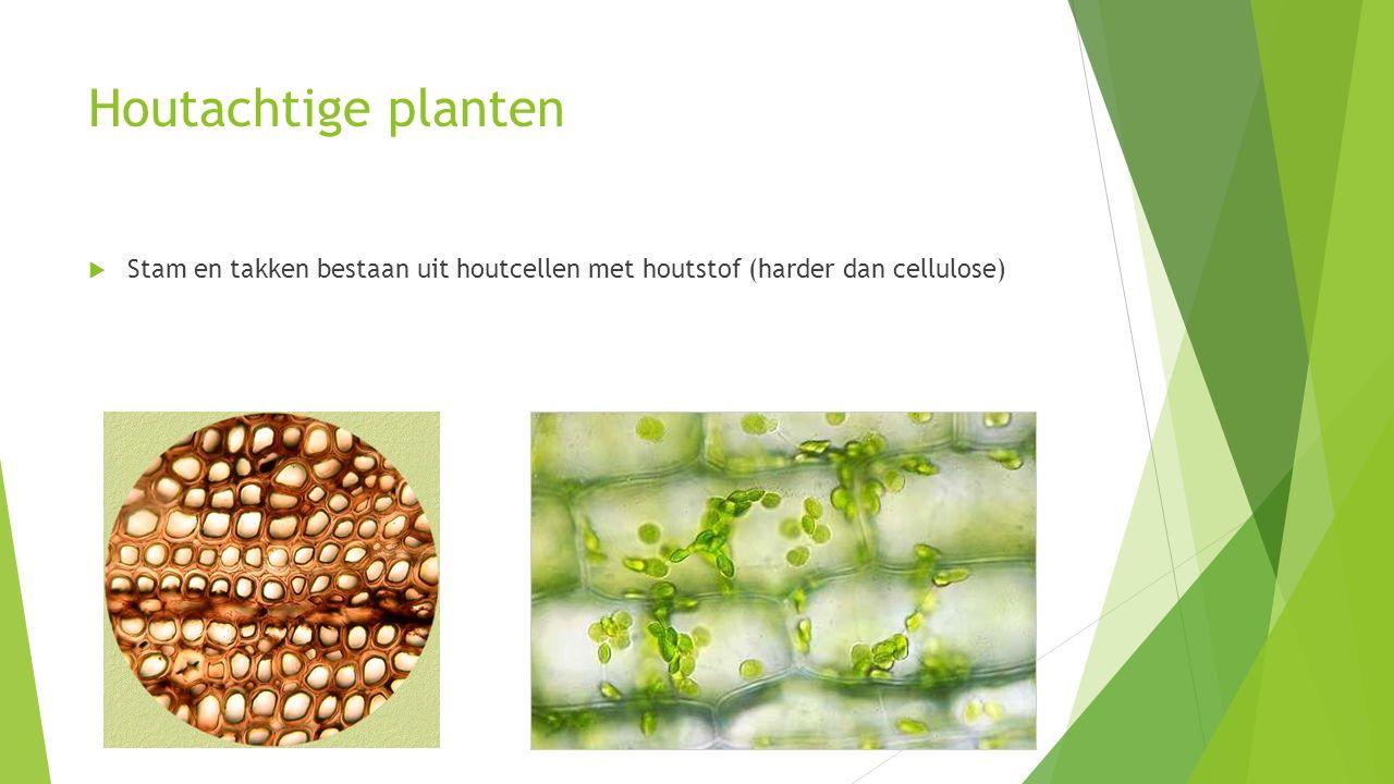 Verschillende soorten planten