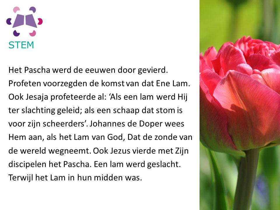 STEM Het Pascha werd de eeuwen door gevierd. Profeten voorzegden de komst van dat Ene Lam.