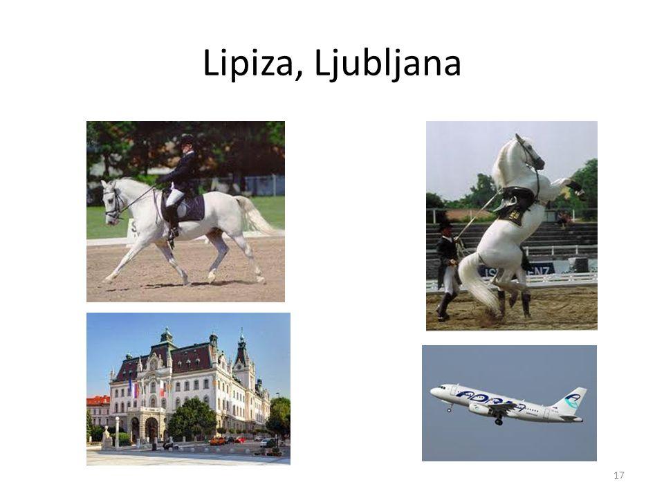Lipiza, Ljubljana 17