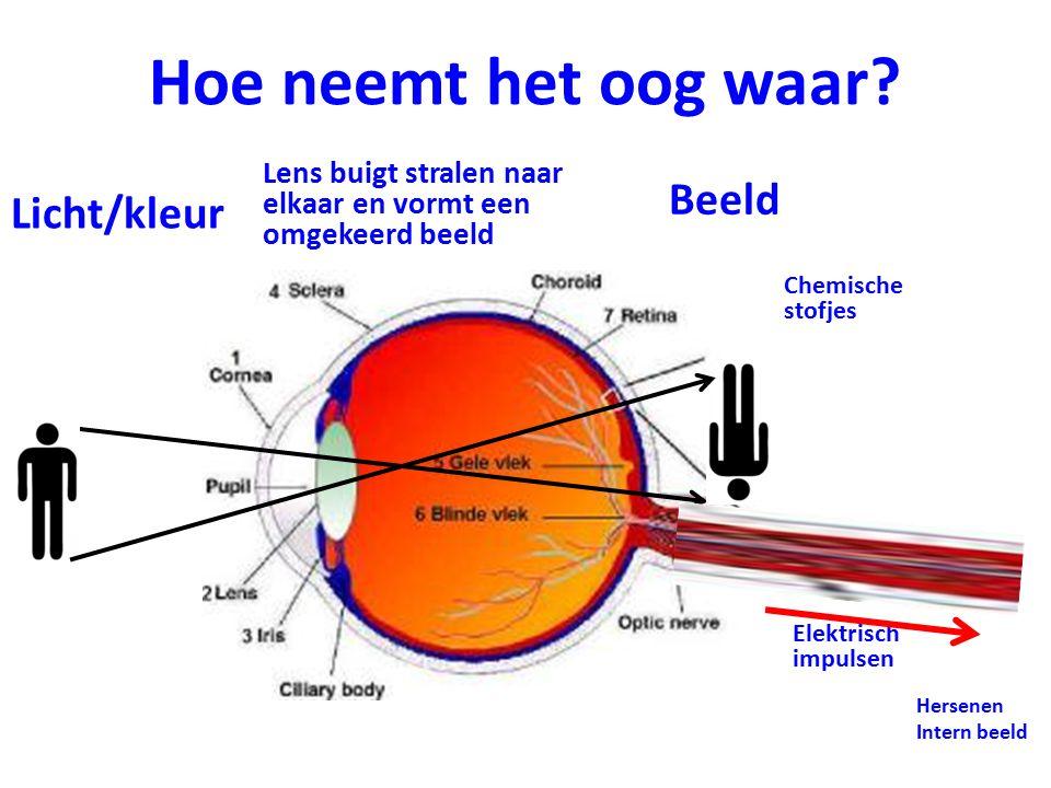 Weglaten, door onze zintuigen Blinde vlek van onze ogen De blinde vlek is een deel van het netvlies achter in het oog waar de oogzenuw het oog verlaat.