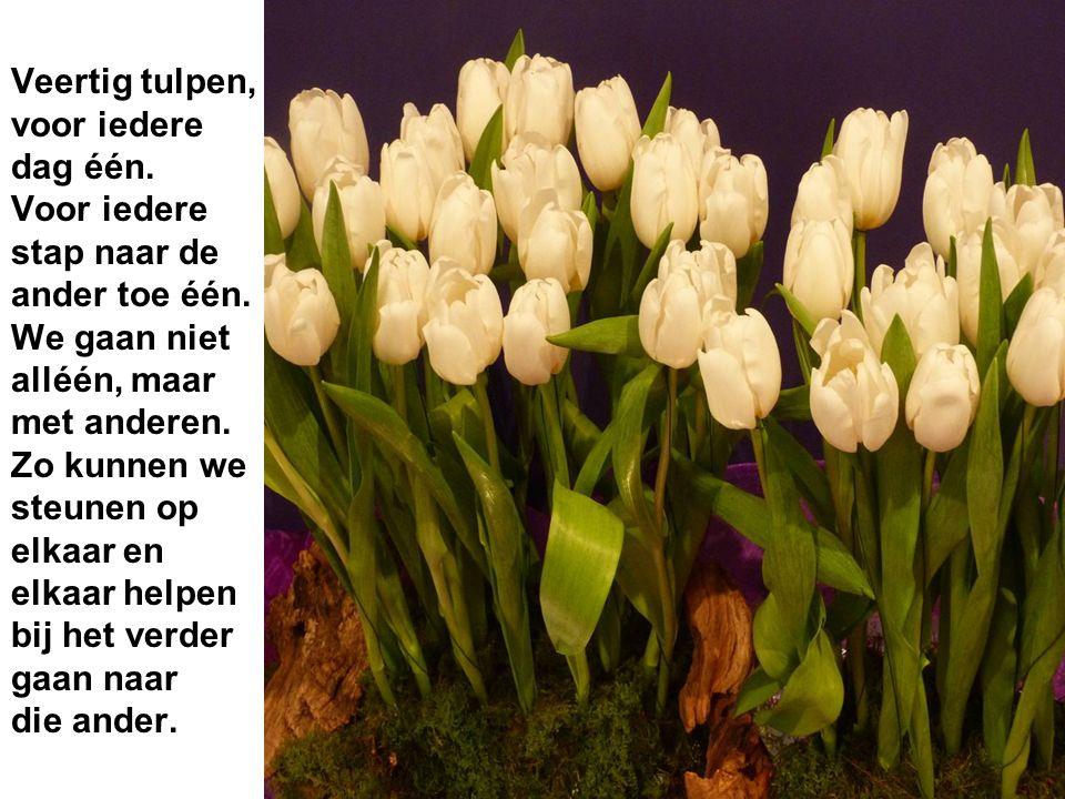 Veertig tulpen, voor iedere dag één.Voor iedere stap naar de ander toe één.