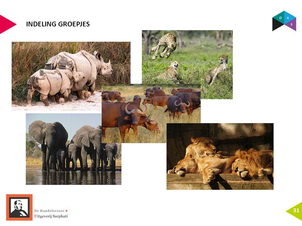INDELING GROEPJES 31