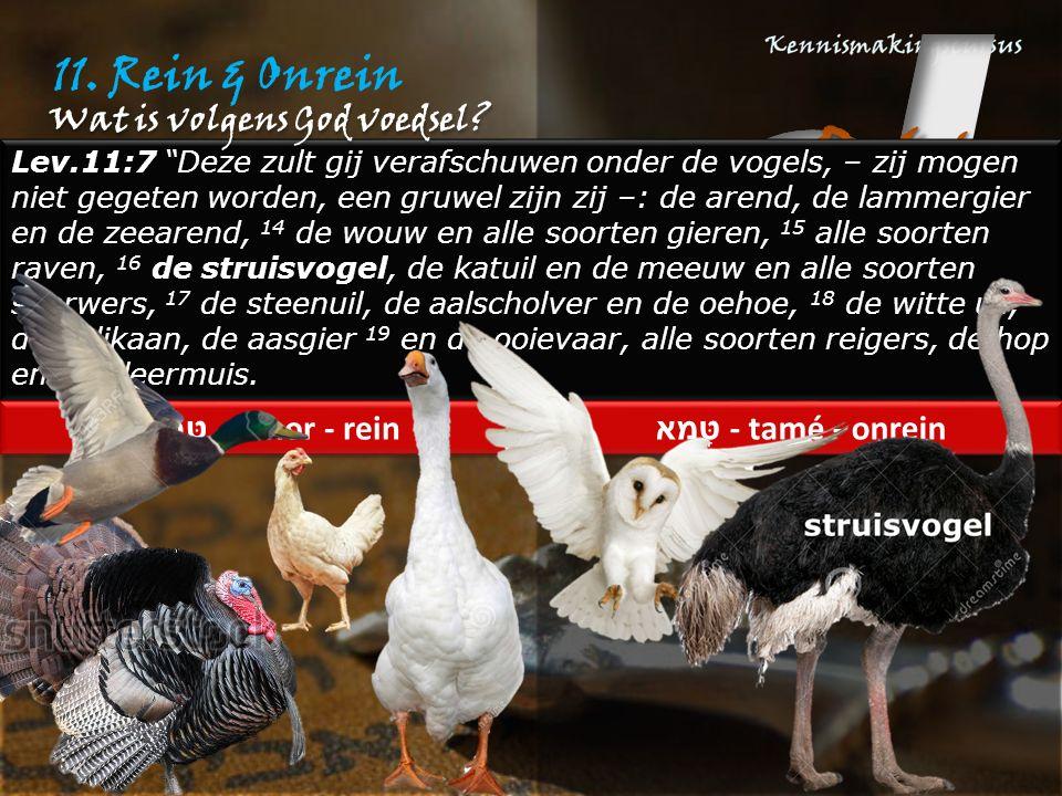 """11. Rein & Onrein Lev.11:7 """"Deze zult gij verafschuwen onder de vogels, – zij mogen niet gegeten worden, een gruwel zijn zij –: de arend, de lammergie"""