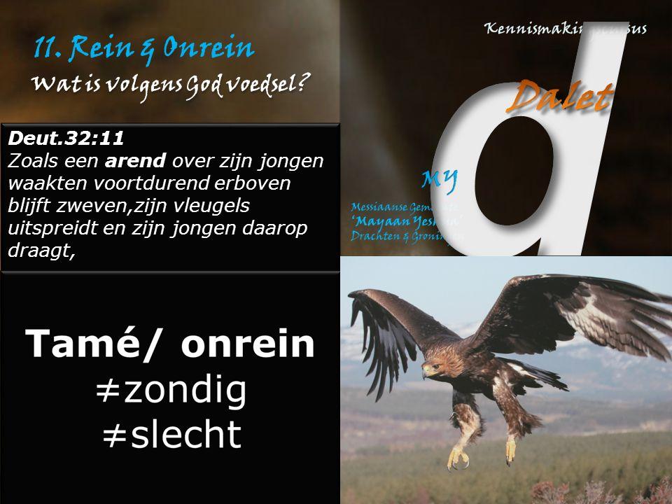 11. Rein & Onrein Deut.32:11 Zoals een arend over zijn jongen waakten voortdurend erboven blijft zweven,zijn vleugels uitspreidt en zijn jongen daarop