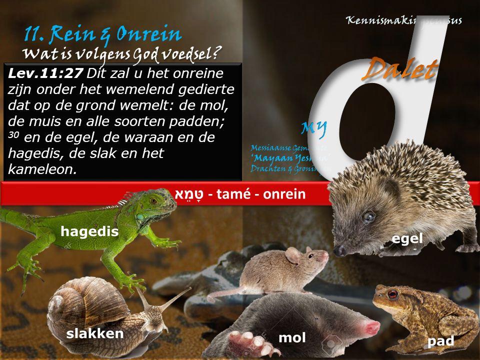 11. Rein & Onrein Lev.11:27 Dit zal u het onreine zijn onder het wemelend gedierte dat op de grond wemelt: de mol, de muis en alle soorten padden; 30