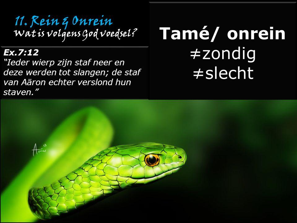 """11. Rein & Onrein Ex.7:12 """"Ieder wierp zijn staf neer en deze werden tot slangen; de staf van Aäron echter verslond hun staven."""" Ex.7:12 """"Ieder wierp"""