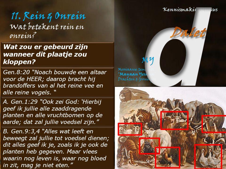 11. Rein & Onrein Wat betekent rein en onrein.