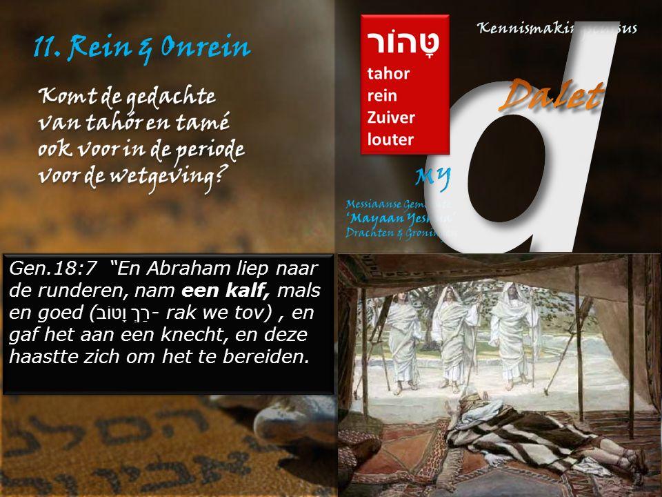 """11. Rein & Onrein Gen.18:7 """"En Abraham liep naar de runderen, nam een kalf, mals en goed ( רַךְ וָטוֹב - rak we tov), en gaf het aan een knecht, en de"""