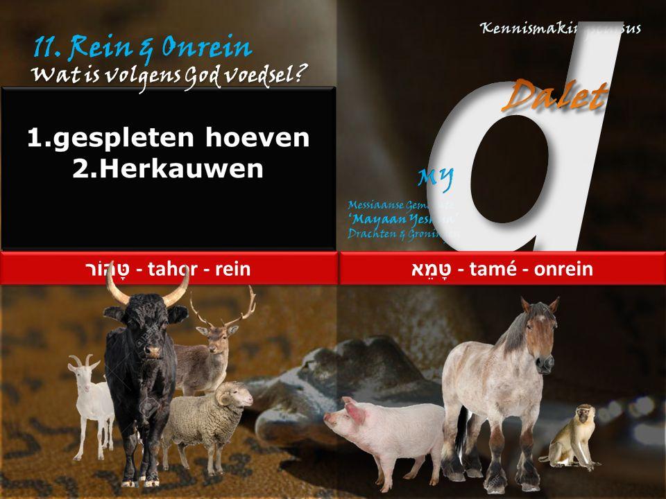 """11. Rein & Onrein Lev.11:2,3 """"Van alles wat op het land leeft, mogen jullie de dieren eten 3 die gespleten hoeven hebben – dus hoeven die helemaal ged"""