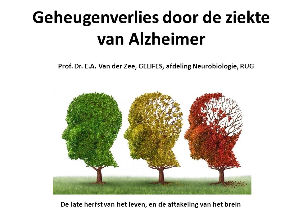 Geheugenverlies door de ziekte van Alzheimer De late herfst van het leven, en de aftakeling van het brein Prof.