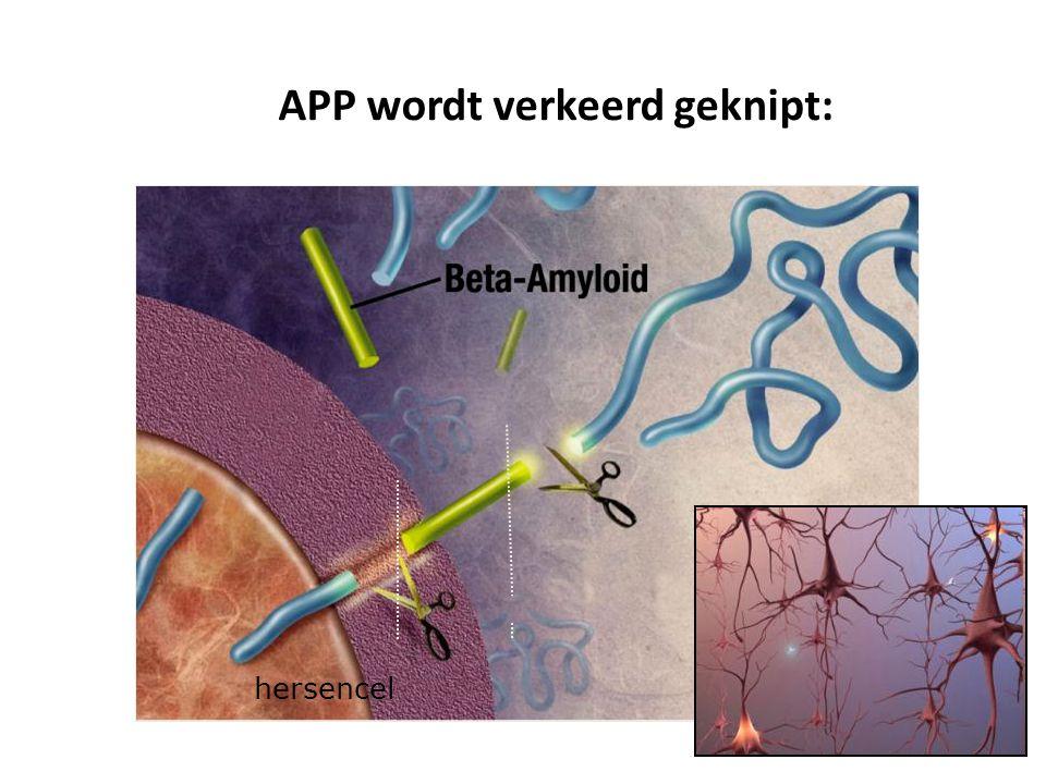 Wat is beta-amyloid? hersencel APP wordt verkeerd geknipt: