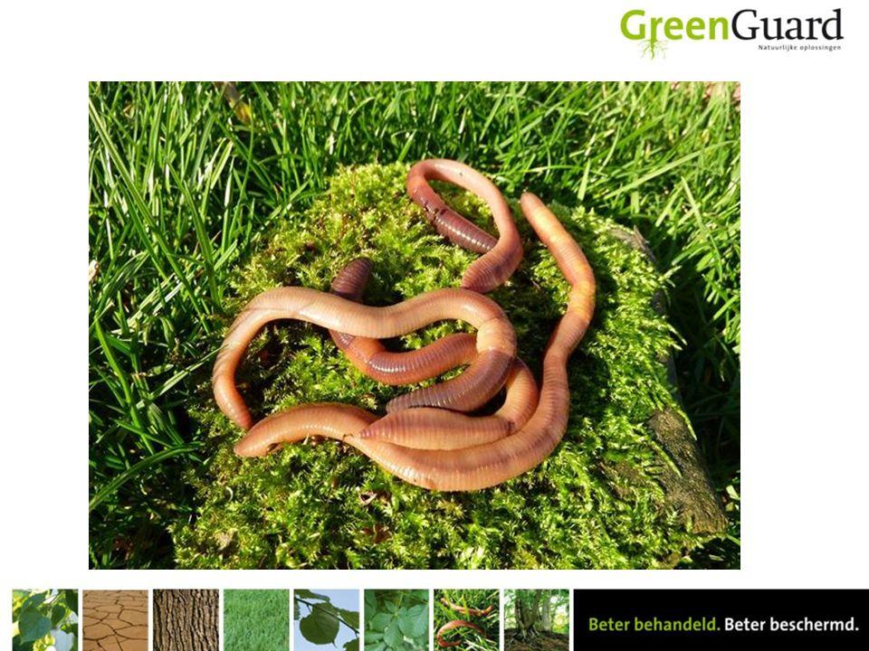 We kunnen regenwormen verdelen in 3 groepen: Mestpiertjes en compostwormen, die zijn klein en rood en komen voor tot 5 cm diep in de bodem.