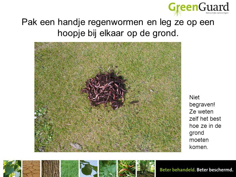 Pak een handje regenwormen en leg ze op een hoopje bij elkaar op de grond. Niet begraven! Ze weten zelf het best hoe ze in de grond moeten komen.