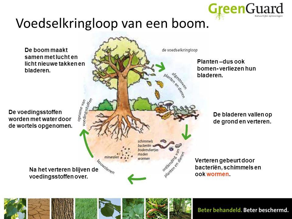 Voedselkringloop van een boom. Planten –dus ook bomen- verliezen hun bladeren. De bladeren vallen op de grond en verteren. Verteren gebeurt door bacte